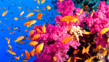24-Best-Places-to-Scuba-Dive-in-the-World